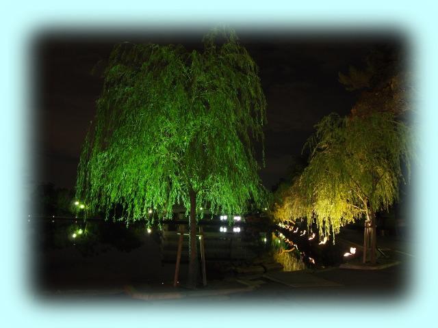 猿沢池のほとりの柳の木(夜)