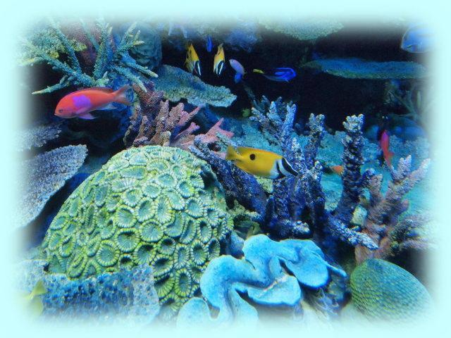 熱帯の海グレートバリアルーフ、絞り値:F4.5、シャッター速度:1/100秒、ISO感度:1600、露出補正:+0.3