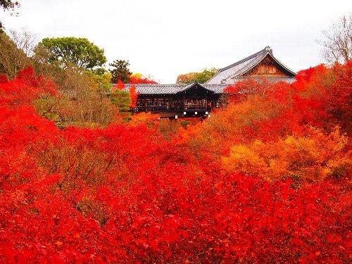 通天橋の対岸から見た東福寺の紅葉の海