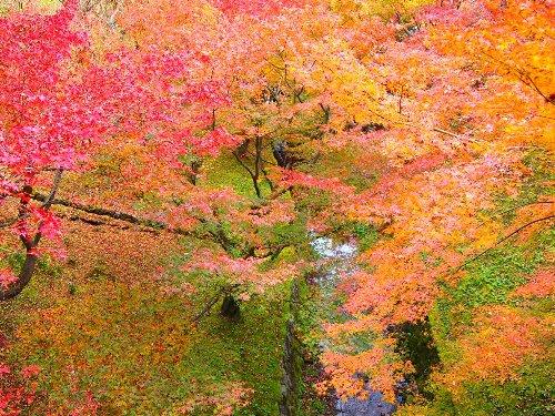 通天橋の下の谷の川と紅葉