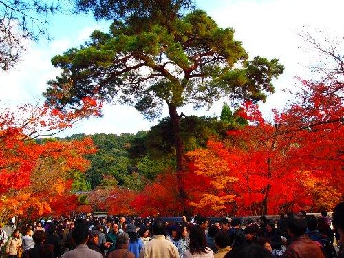 緑の松と真赤な紅葉
