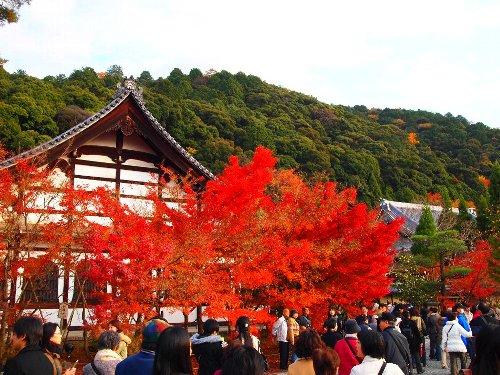 東山を背景とする紅葉の鮮烈さ