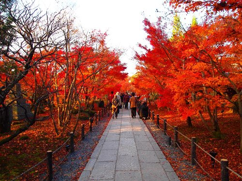 道の両脇には燃えるように鮮やかな紅葉が