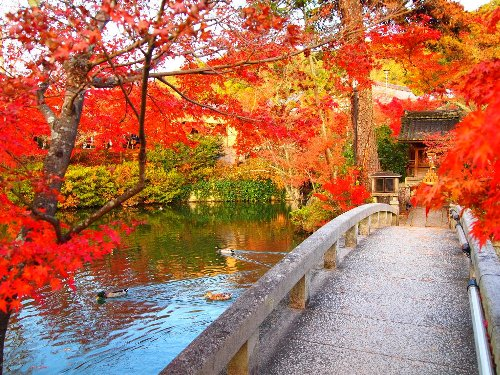 弁天池の紅葉と橋