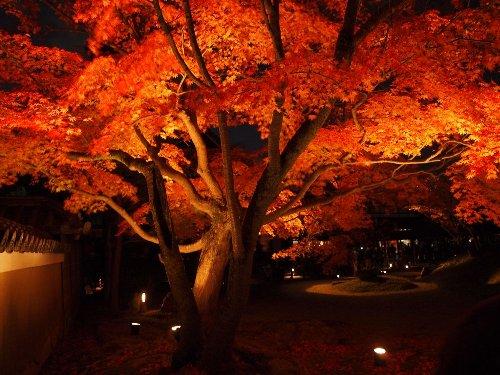 ライトに照らされる紅葉