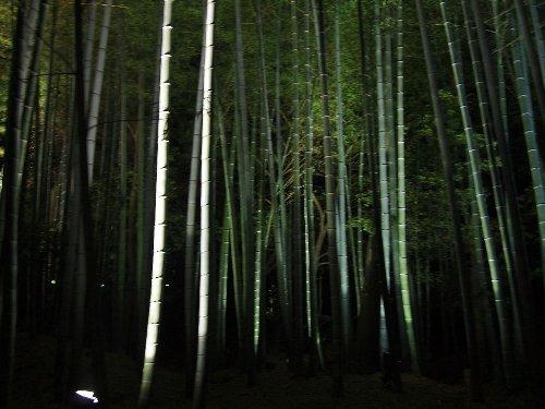 ライトに照らされて幻想的な竹林