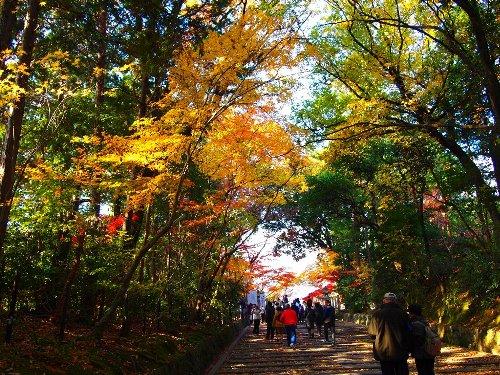 光明寺への紅葉の参道