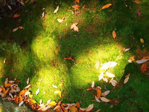 苔の緑の上に落ちている落ち葉