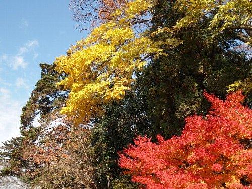 光明寺の紅葉と青空