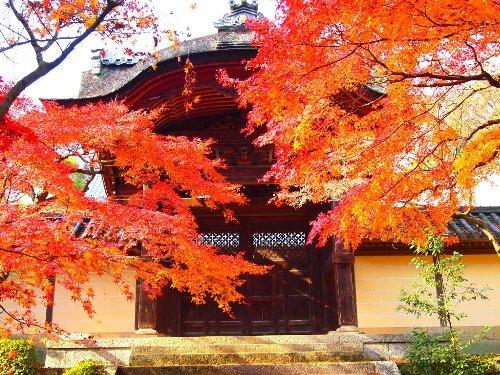 勅使門の紅葉