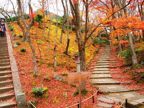 常寂光寺境内を登る階段と紅葉の木々