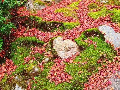 石と苔と紅葉