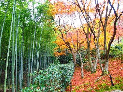 多宝塔へ通ずる道と竹林