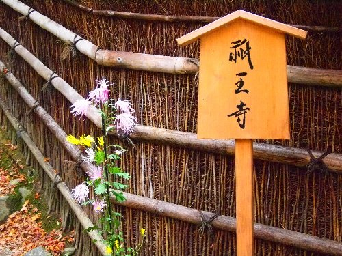 祇王寺の入口近くの嵯峨菊
