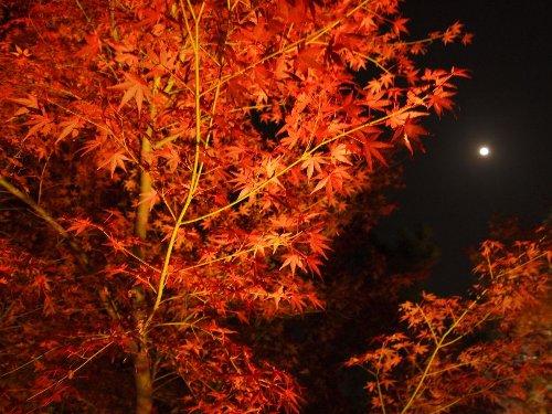 宝厳院の紅葉と月