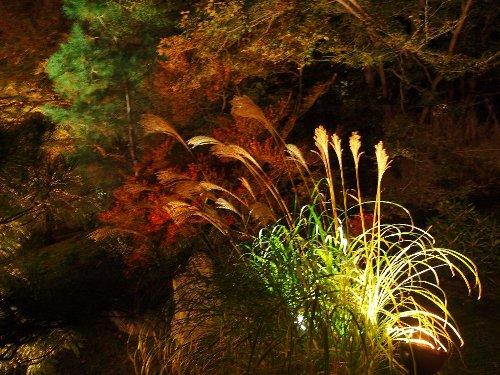 宝厳院の庭のススキ