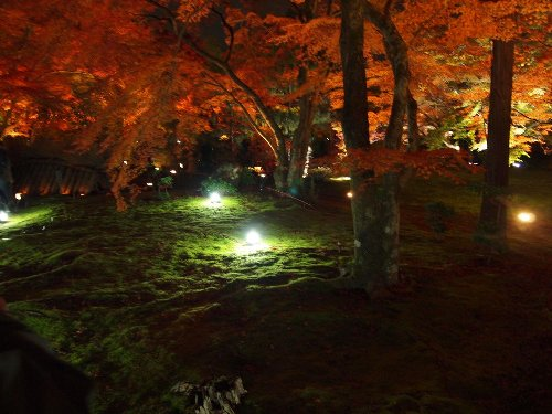 苔の絨毯と紅葉の木