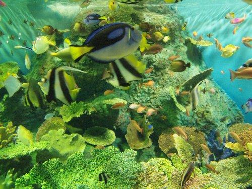 しながわ水族館の海の宝石箱で高速で泳ぎまわる熱帯魚