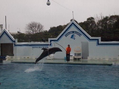 しながわ水族館のイルカ・ショー
