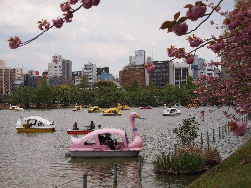 不忍池のボート
