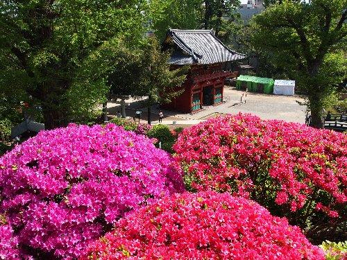 根津神社の楼門とつつじ