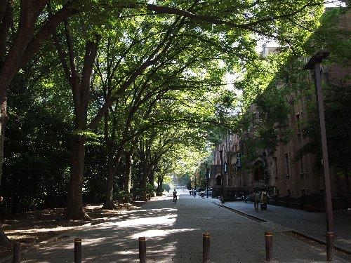 東京大学の毎年春に合格発表が行われる場所