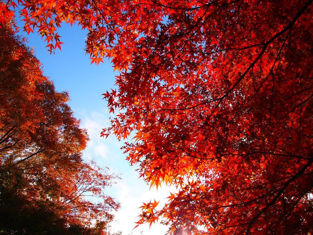 青い空の両脇に真っ赤な紅葉