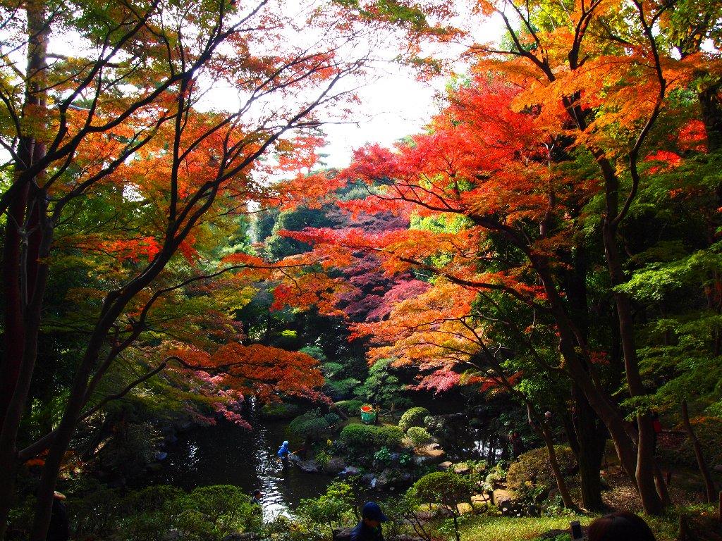 殿ヶ谷戸庭園の次郎弁天池の紅葉の木々