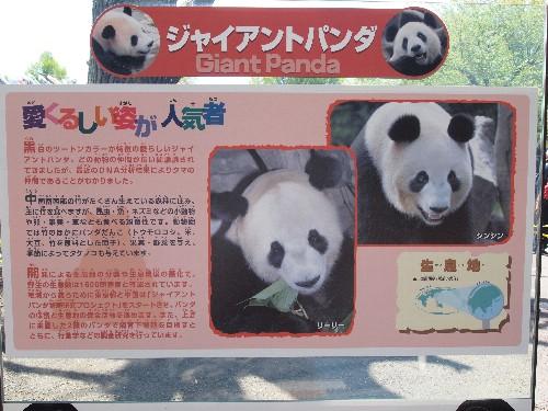 パンダの説明
