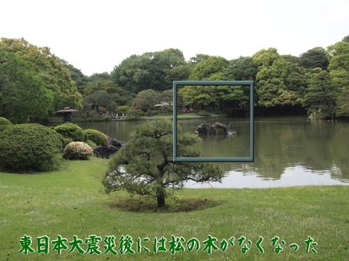 今回は蓬莱島に松の木がなくなっていた