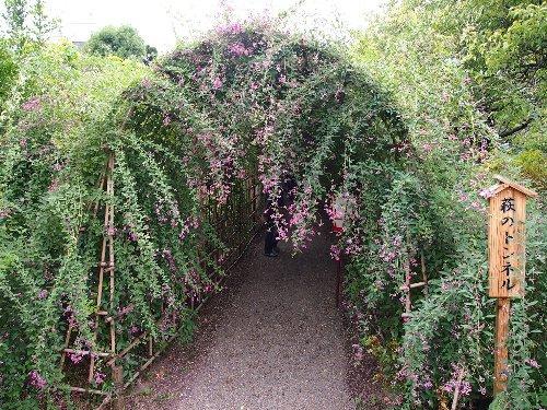 向島百花園の萩のトンネル