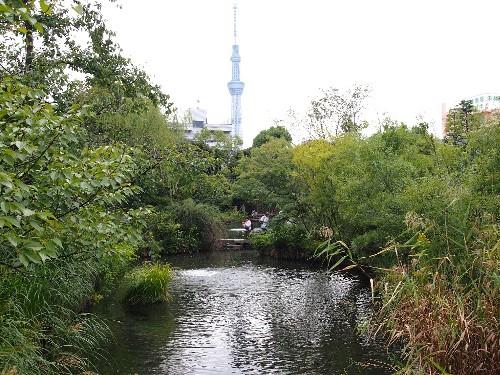 池越しに見える東京スカイ・ツリー