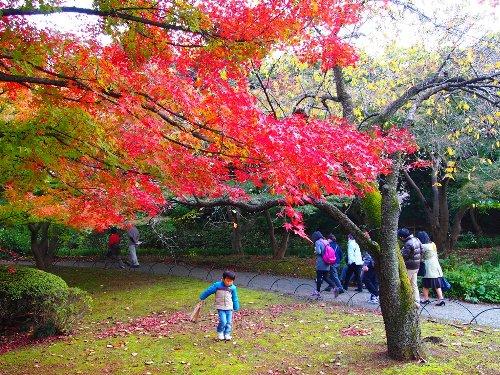 紅葉の木と子供さん