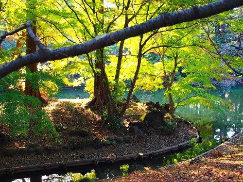 青々とした紅葉の緑の葉