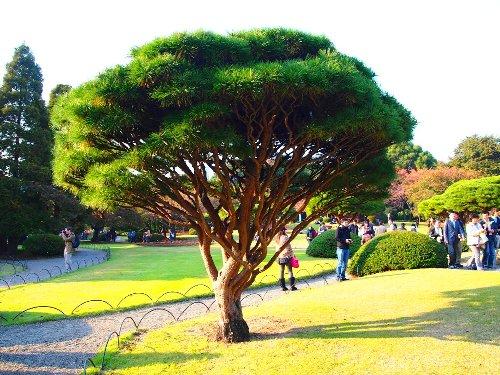 面白い剪定の木