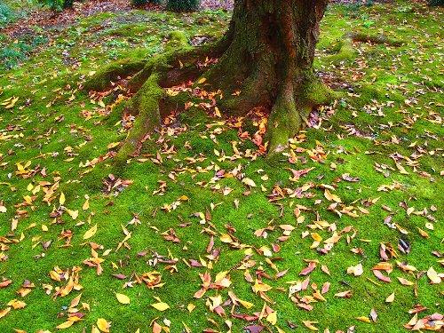 六義園の落ち葉