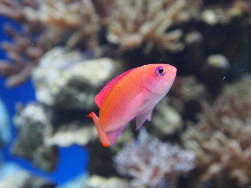 サンシャイン水族館の魚