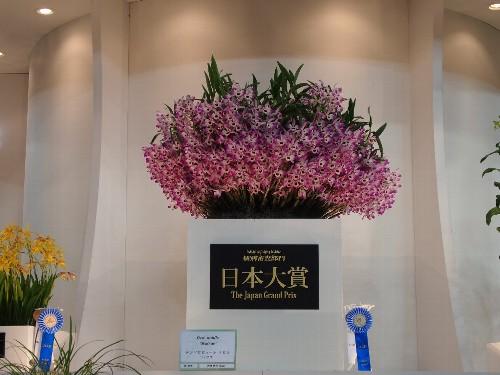 今年の日本大賞受賞者大塚初枝(茨城県)作出のデンドロビューム属ノビルハツエ