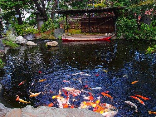 愛宕神社の池と緋鯉