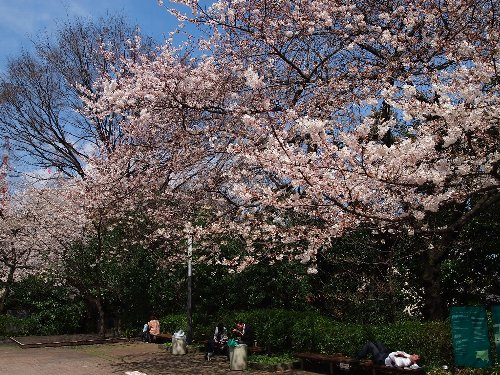NHKの放送会館がある広場の桜と愛宕山ヒルズ