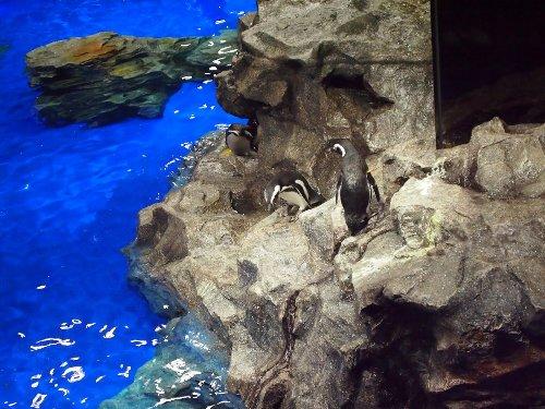 ペンギンの室内開放プール