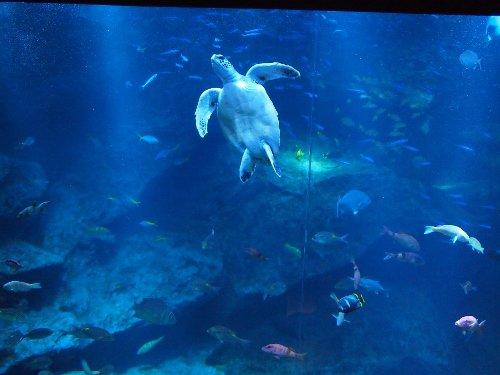 小笠原の海を模した「東京大水槽」ウミガメ
