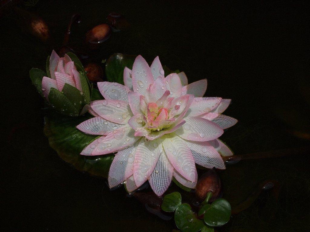 素晴らしい睡蓮の花?でも造花らしい