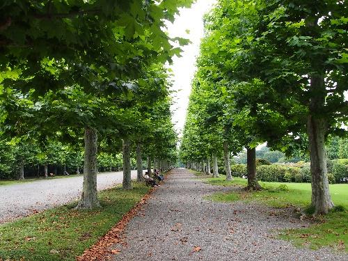新宿御苑のプラタナスの並木