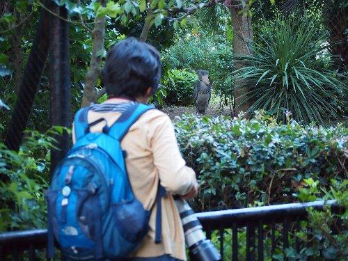 上野動物園のハシビロコウを好きな人
