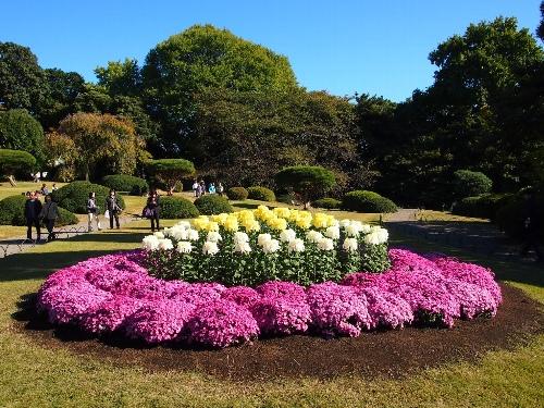新宿御苑菊花壇展の第一露地花壇