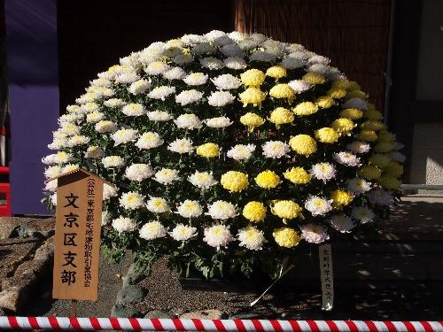 湯島天神の菊まつり・白色と黄色の菊の大作り