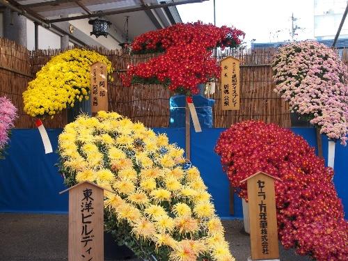 湯島天神の菊まつり・懸崖作り