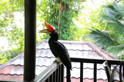 「Hornbill(彩鳥)」