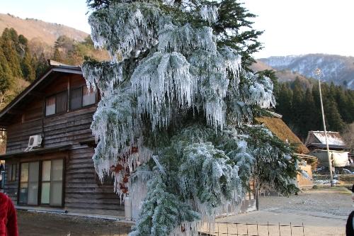 岐阜県の白川郷。こちこちに凍った立ち木